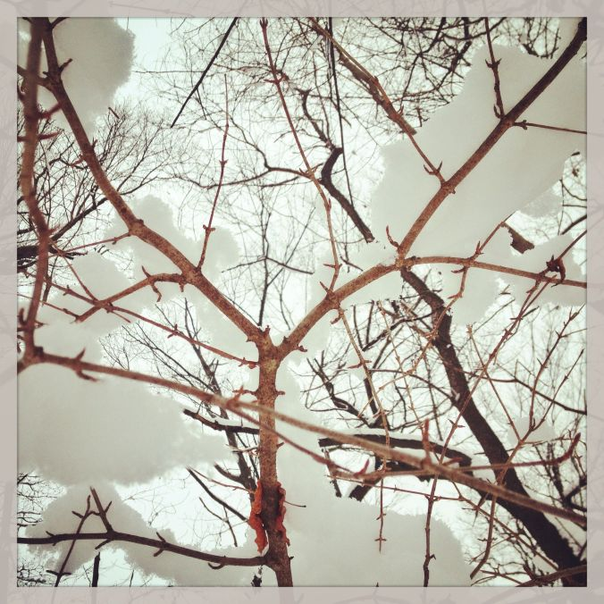 Snow in branches