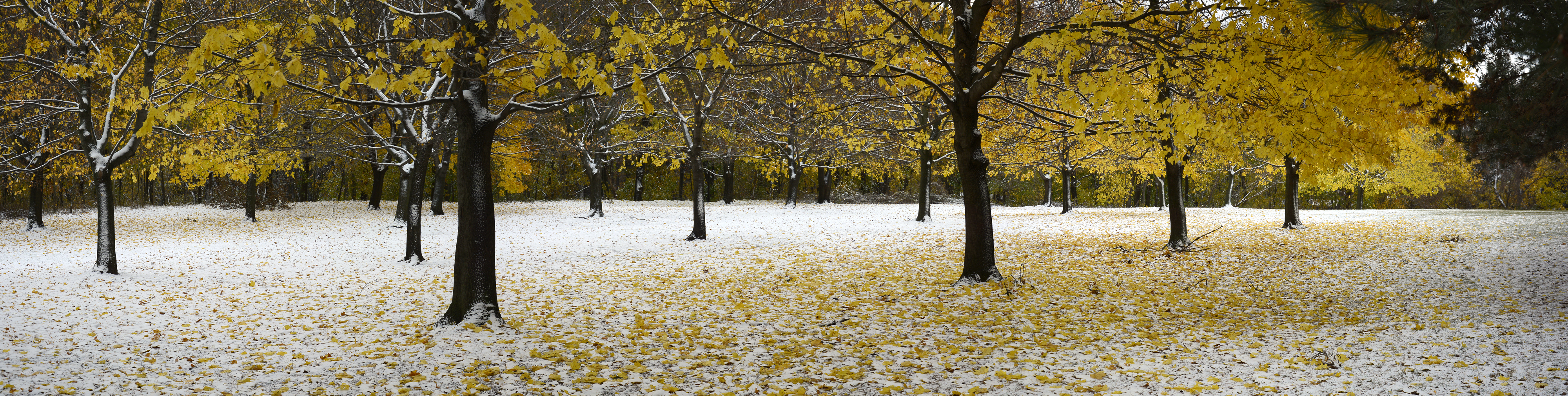 first snow As is true of all mountainous regions, weather in the sierra nevada can change rapidly at any time of the year elevation plays a major role in.